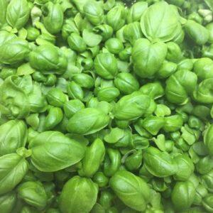 Микрозелень (Микрогрин) СПБ базилик зеленый