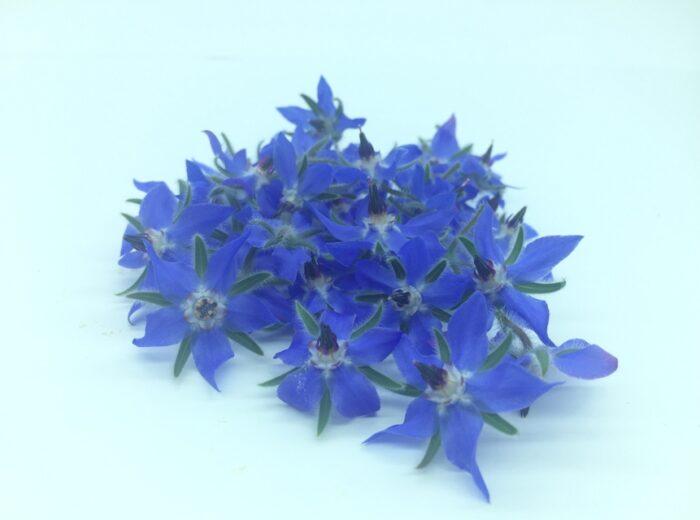 Микрозелень (Микрогрин) СПБ съедобные цветы