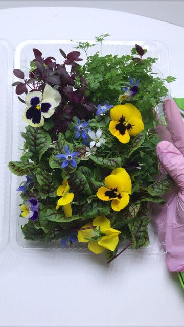 Микрозелень (Микрогрин) СПБ салатные миксы